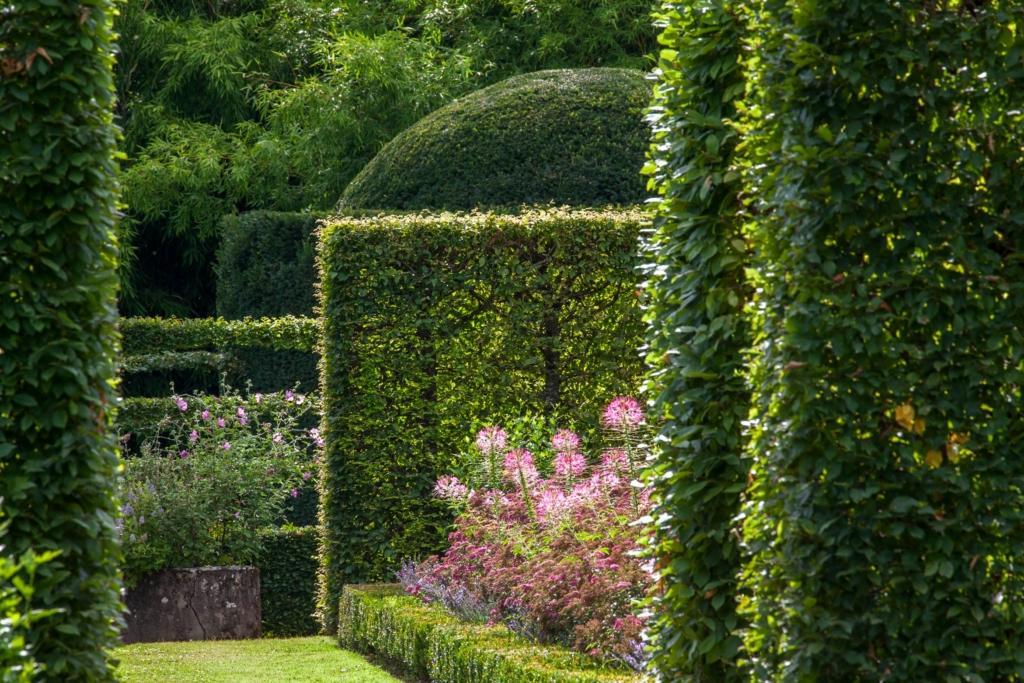 Château de Losse charmille jardinierespheretaxus