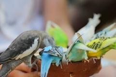 chateau des milandes animation nourrissage oiseaux exotiques